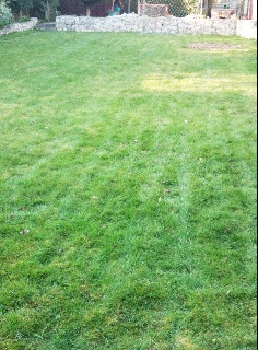 lawn care | Greener Grass